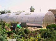 Теплица под поликарбонат- фермерская