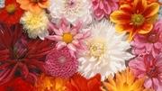 Семена цветов весовые,  пакетированные оптом